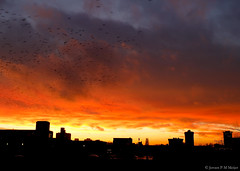 17:07:43 01.12.15 (jpmm) Tags: sunset amsterdam birds clouds vogels wolken starling blacksun zuid stratocumulus 2015