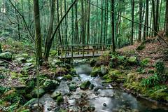 Puente (Perurena) Tags: wood trees naturaleza nature water rio forest river puente madera agua arboles bosque pontevedra brigde vegetación moaña efectoseda riodasfragas