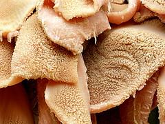 Para Antoni Gallart i Vilarrasa (Raul Jaso) Tags: bw texture textura byn lumix textures pork fz texturas tripe maiale offal menudo cerdo cerdos trippa pancita maiali mondongo fz150 panasonicfzseries mondonguito fz150panasonic rauljaso rauljasofotografia rauljasophotography estomagodecerdo callosmadrileños viscerasdecerdo