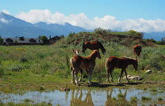 Puigcerd (tgrauros) Tags: catalunya cerdanya paisatge cavalls puigcerd