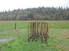 Tools at the ready (Upupa4me) Tags: nature grass washington soil rows valley shovels ohop conservency nisquallylandtrust