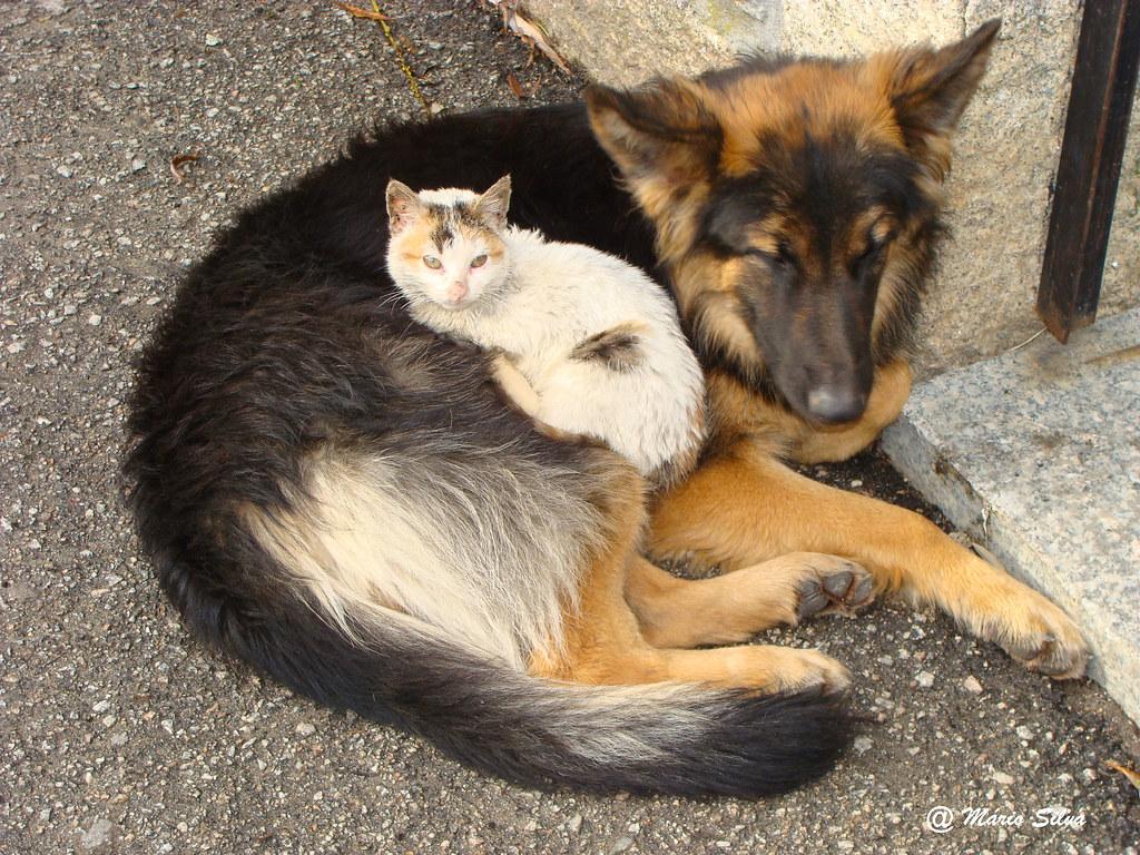 Águas Frias (Chaves) - ... dão-se como cão e gato ---