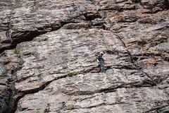 Cajn del Maipo - Valles las Arenas (66) (lxrdrg) Tags: climbing montaa escalada cajondelmaipo escaladadeportiva vallelasarenas pareddejabba pareddejabbah