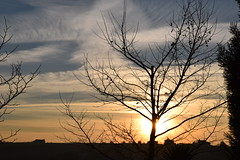 No filter needed.. (fil_____) Tags: winter sunset sky sun plant tree nature landscape outdoor dusk ngc thessaloniki serene neoi        macedoniagreece epivates