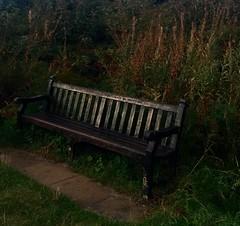 Autumn Bench (NJKent) Tags: autumn bench happyvalley cromer norfolk uk