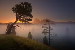 Gravity (Radisa Zivkovic) Tags: mountain surise fog tree travel dolomites italy alps tyrol dawn mist meadow field peak idyllic highland countryside landscape nature scenery outdoor beautiful vastness sunlight environment