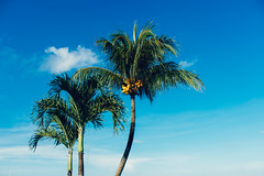 """I dream (Nieri Da Silva) Tags: efs1855mmf3556isii kitlens mexico eost3i editada edited mexicancaribbean sunnyday rivieramaya beach yucatanpeninsula playa noflash nieridasilva soleado sun sol pennsuladeyucatn caribemexicano mayanriviera mexico vista mxico quintanaroo vsco blue colorful colorido vscofilm colores canon azul visitmexico"