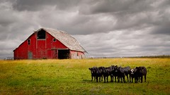 Red barn (wdterp) Tags: barn cattle clouds sky