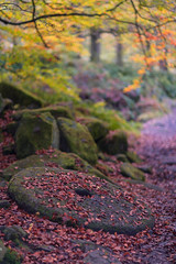 Autumn Colour (RD400e) Tags: canon eos 5d mk3 ef 85mm f12 bwpolariser gitzo autumn padley gorge peakdistrictnationalpark trees woods walking