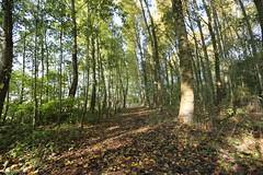 Midelharnis (dariusz_ceglarski) Tags: autumn jesien goereeoverflakkee goeree goereeover flakkee middelharnis holandia holland hollanda holand holadnia hollands holandsko holanda netherlands nl niederlande nederland nederlando netherlads netherland tree canon canon6d bos boom