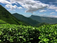 #kolukumalai #kerala #highest #organic #tea #plantation #clouds (Stevinwilson) Tags: kolukumalai kerala highest organic tea plantation clouds