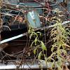 DSC_0146 v2 (collations) Tags: ontario mcleansautowreckers autowreckers wreckers automobiles autos abandoned rockwood derelict junkyards autograveyards carcemeteries