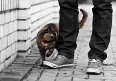 Cat #Phyle (Janne Fairy) Tags: cat street strasenkatze katze cats katzen schuhe mauer beine sweet animal animals tier tiere farbe colorful pet haustier green eyes grne augen tortoiseshell glckskatze cute ss