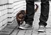 Cat #Phyle (Janne Fairy) Tags: cat street strasenkatze katze cats katzen schuhe mauer beine sweet animal animals tier tiere farbe colorful pet haustier green eyes grüne augen tortoiseshell glückskatze cute süs