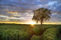 NIK_32202_3_4_ETM2 / Schaidt - Germany (Dan//Fi) Tags: travel landscape hdr sunset sky clouds tree fields countryside schaidt germany light sun