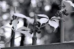 Le portail (Vicky Bella) Tags: 7dwf mbt seineetmarne portail gate france