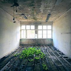 Mind your step (Jo Datou) Tags: gssd empty leer leerstehend green grn marode verlassen verfallen abandoned ausderregion