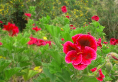 From Eden (christechelon) Tags: flower nature trip photo colors