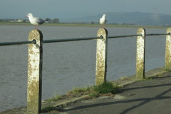 Sandside (Annie-Sue Jyelra) Tags: sortof birds