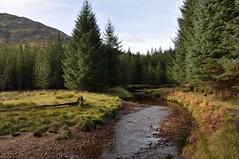 Into the trees (Paul Sammonds) Tags: morar knoydart