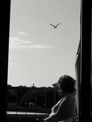 Desde el balcón. (Jose Abadin) Tags: sky seagulls clouds cielo gaviota light luz sun sol colors calm tranquility bw canonsx240 canon calma