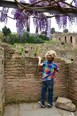 Everett At The Roman Forum (Joe Shlabotnik) Tags: forum italy italia april2016 wisteria roma justeverett rome everett 2016 afsdxvrzoomnikkor18105mmf3556ged