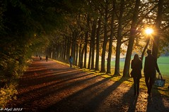 Romantic autumn walk (Mike Y. Gyver) Tags: myg tervuren belgium belgique bruxelles flare tree sun walk d90 dof nikon nikkor18105 nature silhouette shadows atmosphre relax mood moody silence couple romantic leaf automne autumn autofocus imagetrolled