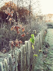 Fence line Nature No People Day Tree Outdoors Backgrounds Beauty In Nature Cold Temperature (markjowen66) Tags: nature nopeople day tree outdoors backgrounds beautyinnature coldtemperature