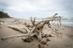 Driftwood (San Martin Photography) Tags: southhavenmi driftwood canoneos5dmarkiii 5dmk3 canonef1635mmf28liiusm landscapes landscape shore sand highfieldbeach waves nature beach puremichigan