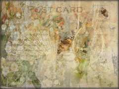The Memories of Mrs Edward Sinclaire-Browne (virtually_supine) Tags: flowers photomanipulation vintage mirror fan creative butterflies textures faded vintagepostcard layers gauze rosebuds gypsophilia digitalartwork photoshopelements9 awardtreechallengeno133~vintagefloral
