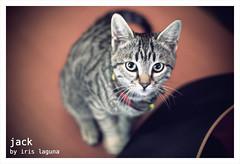 JACK THE CAT - POR IRIS LAGUNA