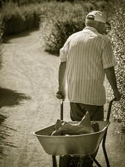 Old man (erkan.oeztuerk) Tags: art germany deutschland mann arbeit gelsenkirchen tamron90 d7100