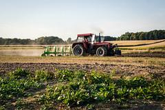 Wczorajsze żniwa II (Kamcia666) Tags: traktor natura pola marklowice sierpień żniwa plony