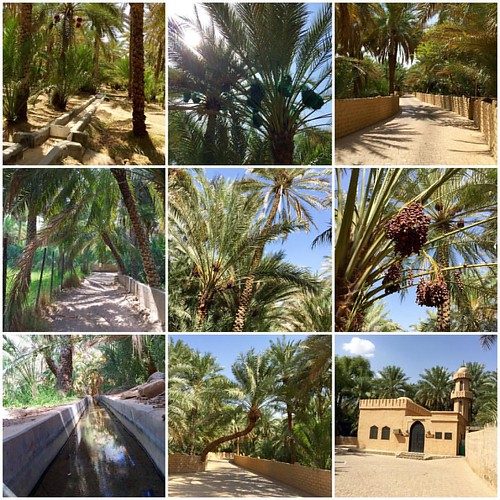 Some impressions of Al Ain Oasis #inAbuDhabi