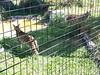 20150919_114729 (mjfmjfmjf) Tags: oregon zoo 2015 greatcatsworldpark