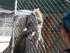 20150919_115210 (mjfmjfmjf) Tags: oregon zoo 2015 greatcatsworldpark