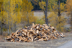 Getting Ready for Winter (bhophotos) Tags: wood travel autumn trees landscape geotagged nikon autumncolors chopped wyoming aspen tetons firewood jacksonhole woodpile grandtetonsnationalpark gtnp antelopeflats d700 70200mmf28gvrii