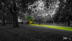 NCPhotography-Flickr-1.jpg (ViewNCPhotography) Tags: park trees light sunset bw sun colour tree green grass ray sunny colourful hybrid possibilities positivity
