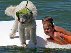 ginger-out-on-the-lake--she-loves-doing-everything-with-her-family--shes-one-of-lilly-and-tobys-girls-_2778017829_o