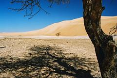 Mauritania (denismartin) Tags: africa travel shadow sky tree sahara trek sand alone desert dunes afrika lonely acacia wste atar mauritania mauritanie erg   canoneos500 chinguetti  ergouarane  denismartin    mrtny argenticpic lagueila