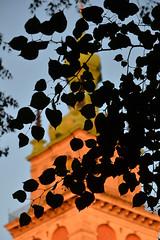 The Church of the Assumption, Lviv (Thomas Roland) Tags: dormition assumption church успенська церква uspenska tserkva orthodox ukrainian cathedral evening aften light warm summer sommer holiday travel ukraine львів lvov lemberg city by stadt україна oblast l'viv europe europa historic center centre unesco world heritage building outside blue sky