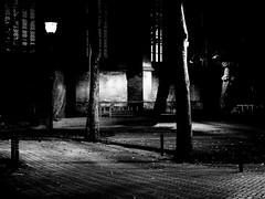 (Nico_1962) Tags: trees bomen shadows schaduw zwolle leica summicrom m240 leicam bw zwartwit summicron summicron50mm primelens manualfocus nederland thenetherlands