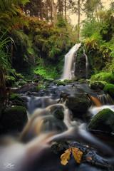 Autumn flow (Steve Clasper) Tags: hindhopelinn northumberland forest kielderforestdrive steveclasper longexposure autumn