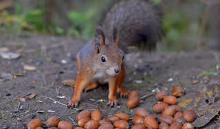 Food for squirrel. Photo taken with 50.0 mm lens!