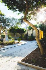 Sun star (Nicola Pezzoli) Tags: favignana sicilia sicily island egadi summer sea water colors nature canon tourism sun star flare florio tonnara stabilimento conte garden tree warm