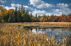Colourful Days (Knarr Gallery) Tags: color autumn leaves trees fall pond reeds reflection marsh muskoka huntsville rosseau sky clouds knarrgallery nikon d300 topaz nikon18200mmvriiafs