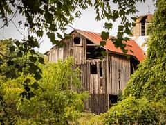 Old barn, Ithaca, NY (hickamorehackamore) Tags: 2016 ithaca ny nystate newyork newyorkstate september barn