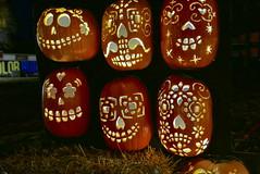 (theleakybrain) Tags: pumpkinnights pumpkin nights mnstatefair p1460109 halloween halloweenwalk minnesota jackolantern jack lantern