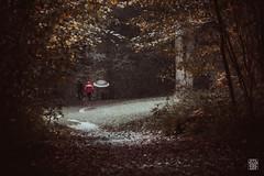 2016-10-23_Q8B1591  Sylvain Collet.jpg (sylvain.collet) Tags: autumn boisdeclichy forest umbrella pluie foret automne rain parapluie nature