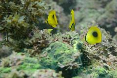 20161010-DSC_9766-2.jpg (d3_plus) Tags:  southizu 1nikkor185mmf18 fish marinesports apnea zoomlense sea j4  nikon1  skindiving watersports sky  japan port  50mmf18 50mm 185mm nikonwpn3    nikon nikkor   nikon1j4 wpn3   snorkeling 1 underwater drive scenery   nature 185mmf18   izu waterproofcase  diving